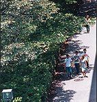 キャンパス風景(夏)