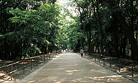 The Grove of Tadasunomori